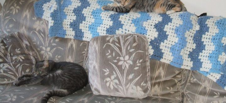 DIANE: Alec Xnd Cat