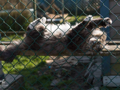 Skittles, RAPS Cat Sanctuary