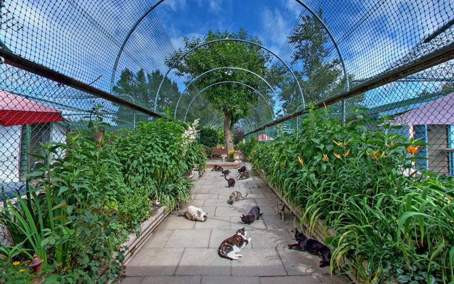 raps cat sanctuary
