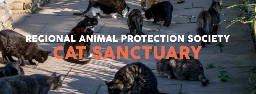 cat sanctuary visiting hours