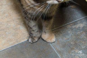 Christina Aguilera Polydactyl Toes, RAPS Cat Sanctuary