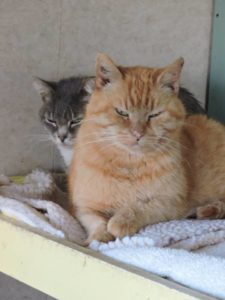 Marilee snuggling with Gilbert, RAPS Cat Sanctuary