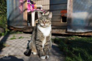 Snickers, RAPS Cat Sanctuary