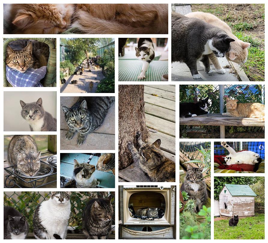 raps cat sanctuary collage