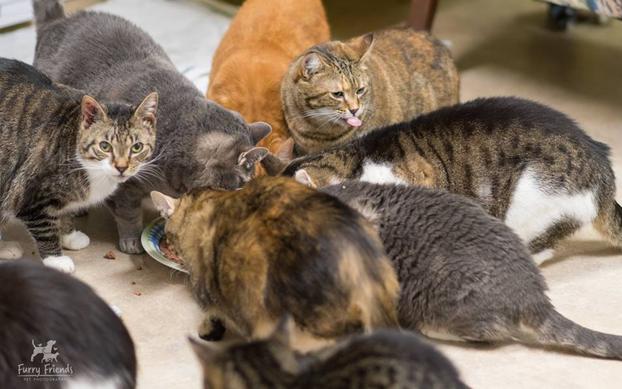 cat sanctuary admission fee